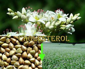 Buckwheat lowering cholesterol