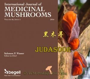 Jelly ear - Medicinal Mushrooms