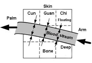 Pulse diagnosis chart